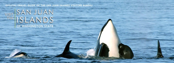 Killer Whale Watching on Orca Island ~ San Juan Islands