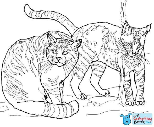 european wildcats coloring page free printable coloring