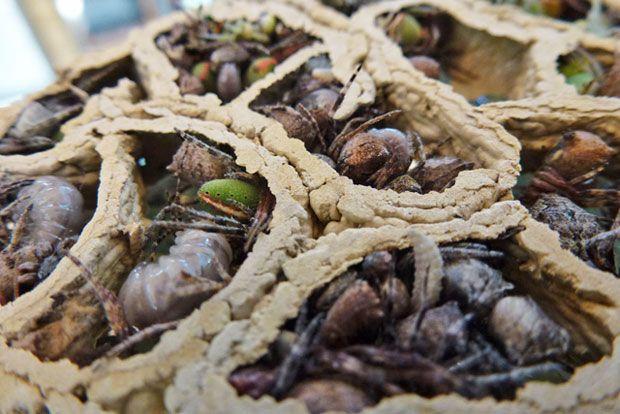 wasp nest identification