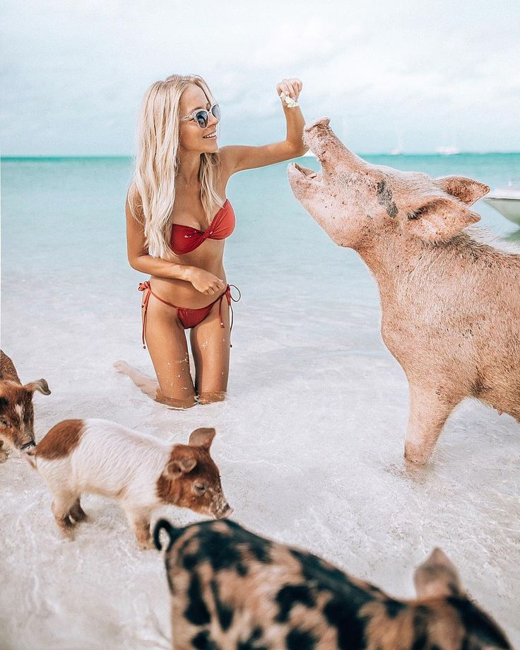 Bucket list, to swim with these pigs