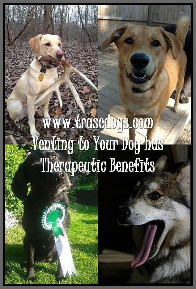 Easy Ways Of Caring Of A Dog Dogs Your Dog Training Your Dog
