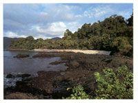 La serranía se incrústa en el océano Pacífico y forma bellas ensenadas como la de Utría.