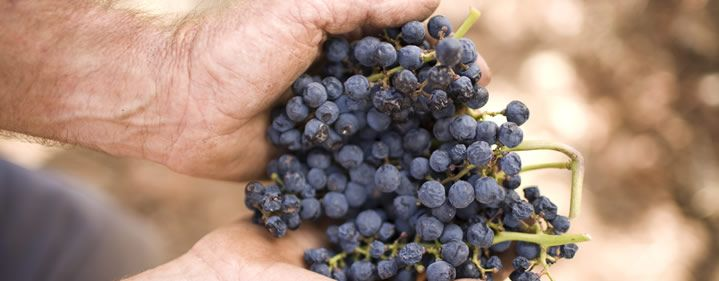 The Art of Wine featuring Torbreck - Lyrebird Restaurant, QPAC July 24th @torbreckbarossa #BNEwine