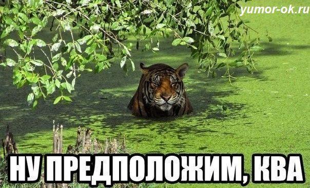 tiТигр   Когда я учился во втором классе, мы жили (служили), на небольшом острове, что на реке Амур. Китай ближе чем Хабаровск, его в подзорную трубу видно. Морозы стояли дай бог, кругом леса, по крепкому льду, через реку к нам в.....