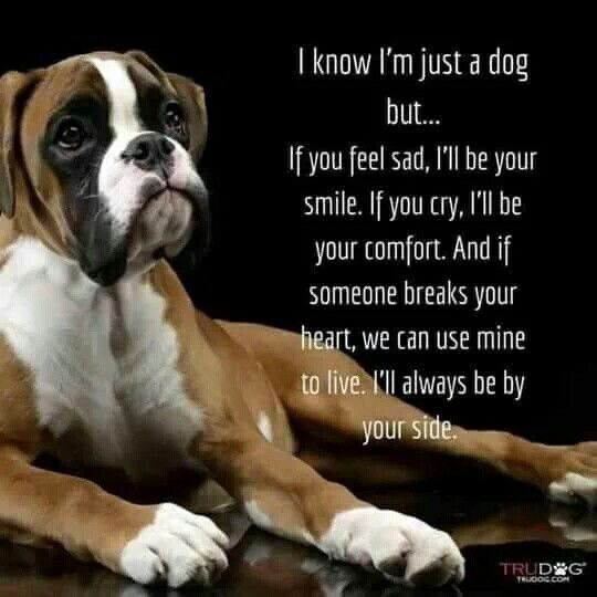 #BoxerMom #BoxerDogLife #ILoveMyBoxers | Funny Boxer Dogs ...