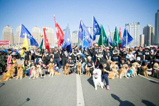 Abbasso Yulin festival