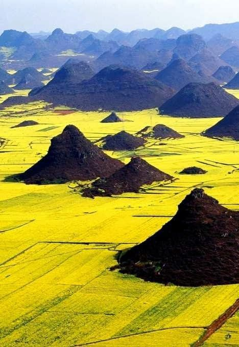 15 Unbelievable Places we resist really exist - Canola Flower Fields, China