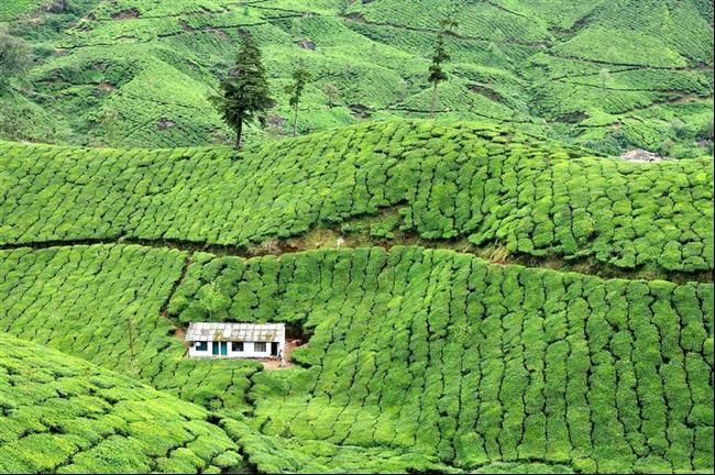 Munnar, India 28 Unique And Isolated Houses Around The World • Page 5 of 5 • BoredBug