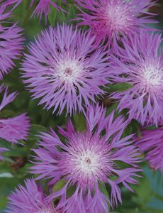 Guide to plants that will survive coastal gardens