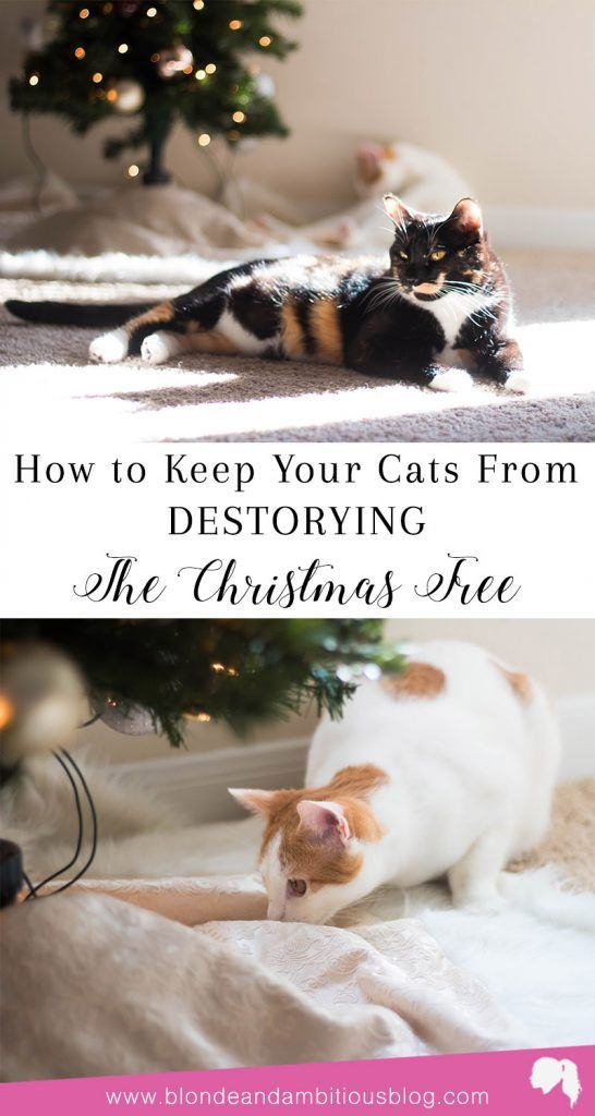 How To Keep Your Cats Away From Your Christmas Tree | Blonde and ...