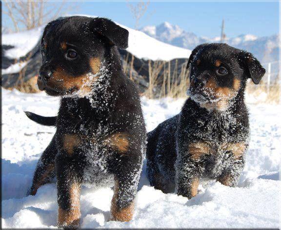 Beautiful puppies.