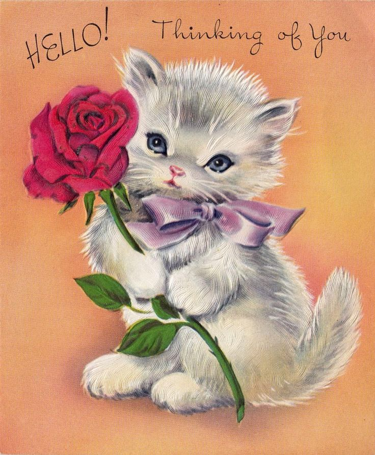 Image result for thinking of you cat images