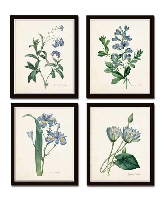 Botanical Print Set, Redoute Botanical Prints, Canvas Art, Giclee, Blue Botanical Prints, Illustration, Wall Art, Prints and Posters