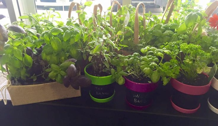 Our herbs have arrived and they look and smell amazing.