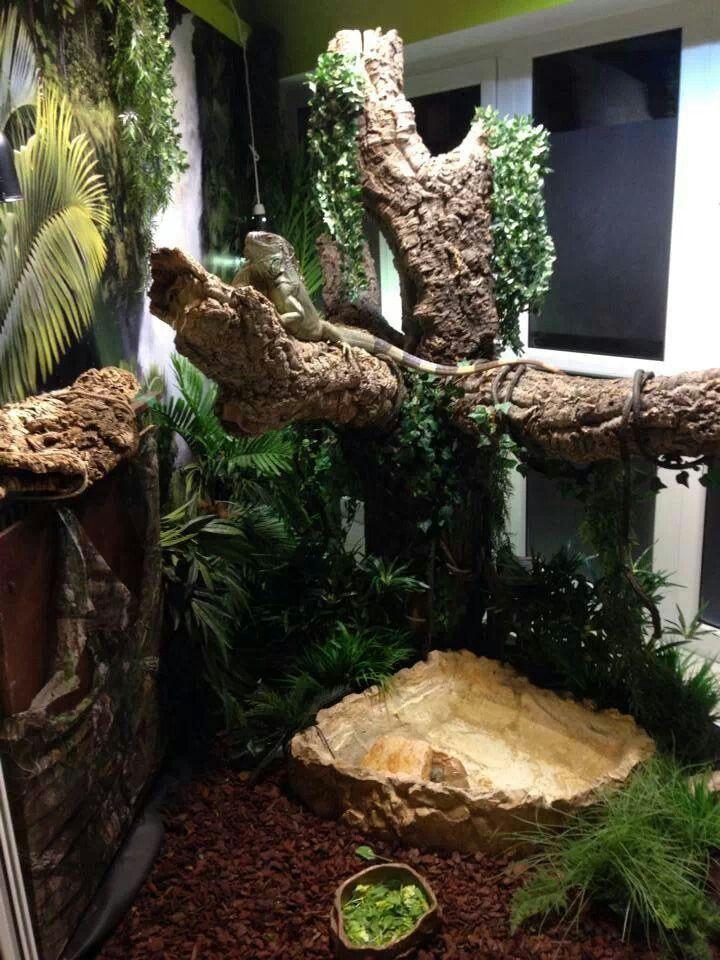 Amazing iguana cage