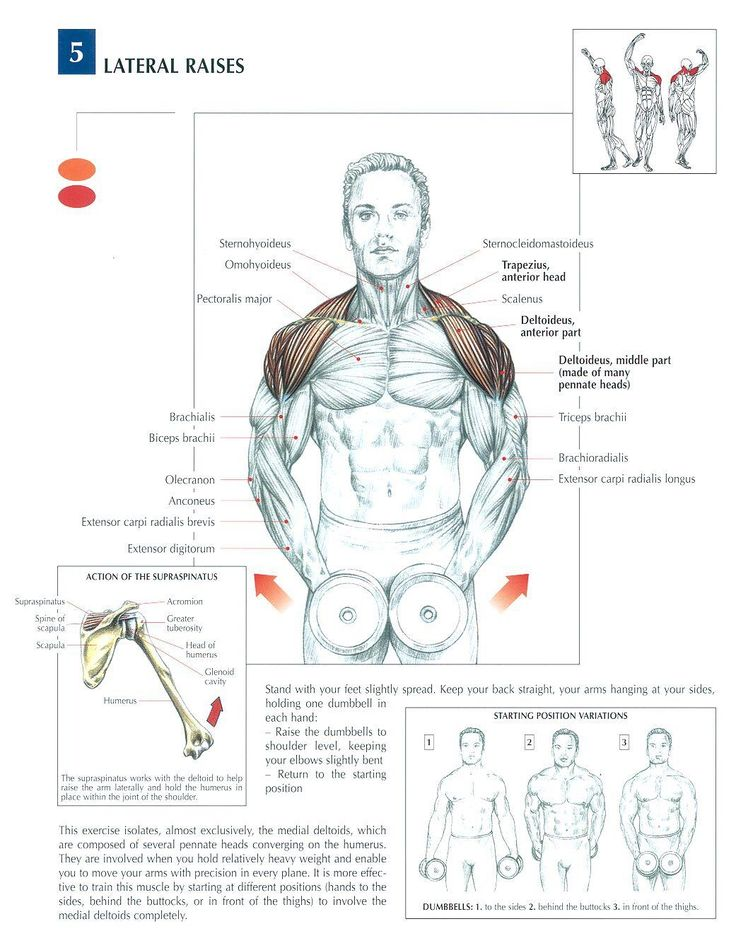 Dumbbell Lateral Raises ♦ #health #fitness #exercises #diagrams #body #muscles #gym #bodybuilding #shoulders