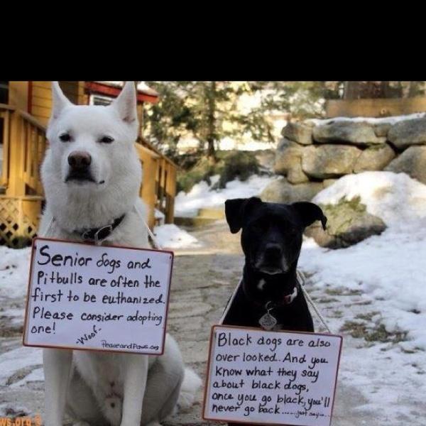 adopt a dog :)