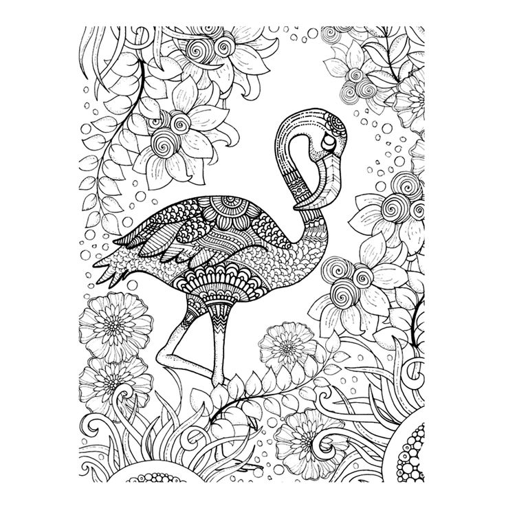 Flamingo Flamingo Pinterest Adult Coloring Flamingo