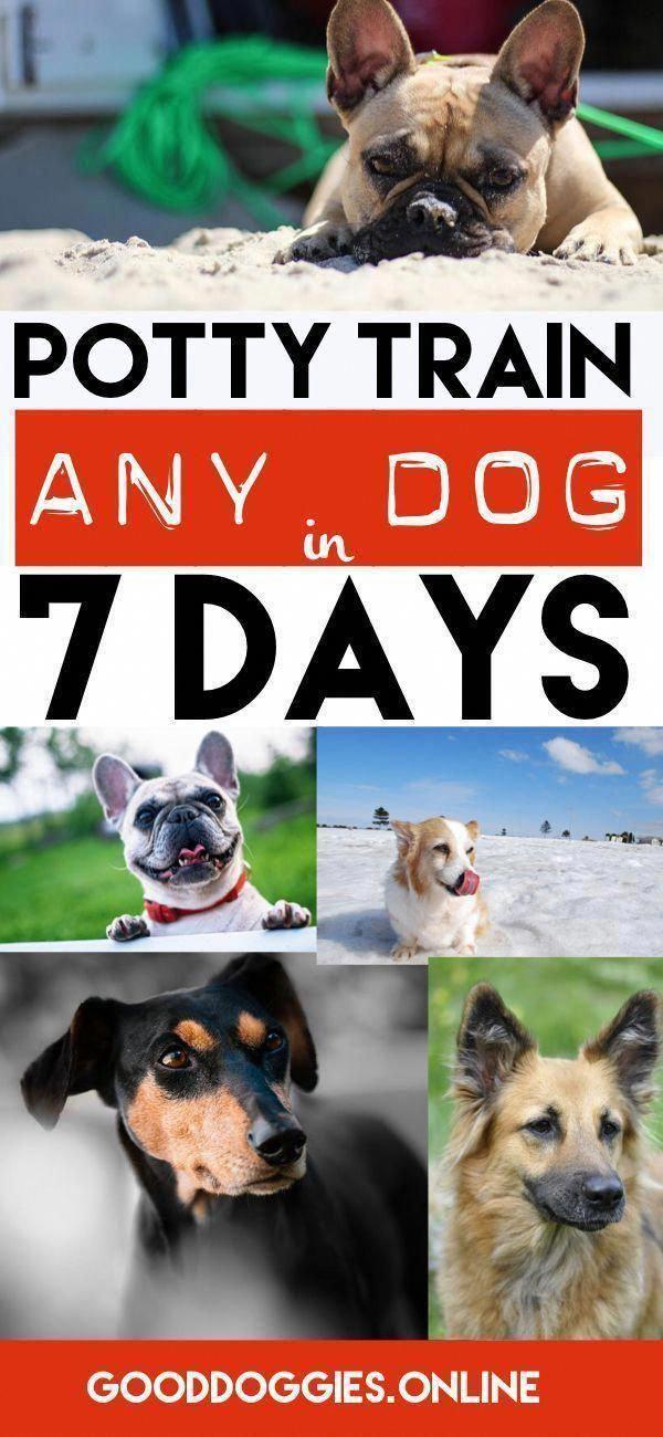 Sentimental Executed Dog Lovers Buy Now Dog Training Dog Potty