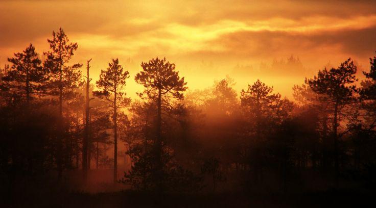 Tämä aamuvalon maa.