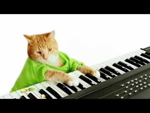 Keyboard Cat's Wonderful Pistachios Commercial