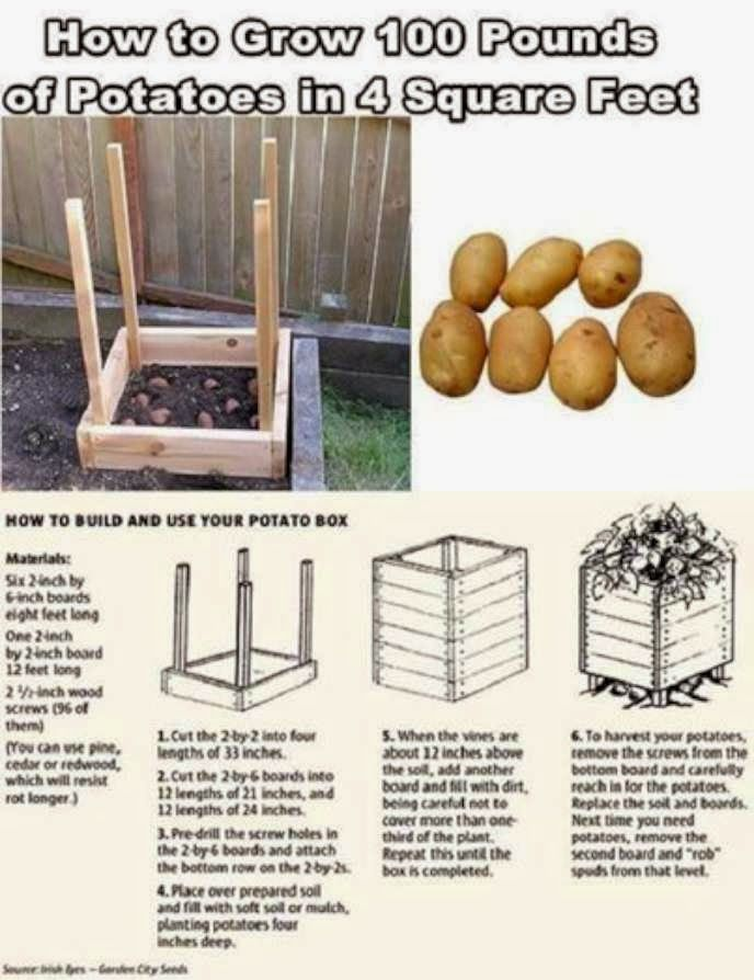 90 Miles From Tyranny : Prepping: How To Grow 100 Pounds Of Potatoes In 4 Square Feet..