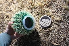 The Cactus Cache