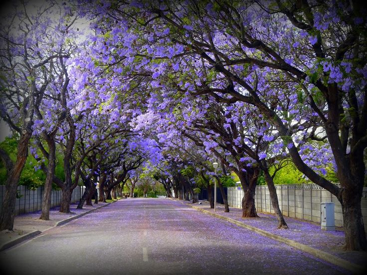 @GoToSouthAfrica @ExclusivGetaway could there be anything more beautiful than nature #TravelChatSA #DiscoverRobertson