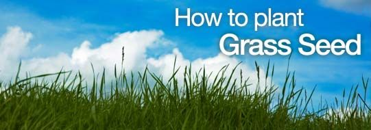 How to Plant Grass Seed With Video -