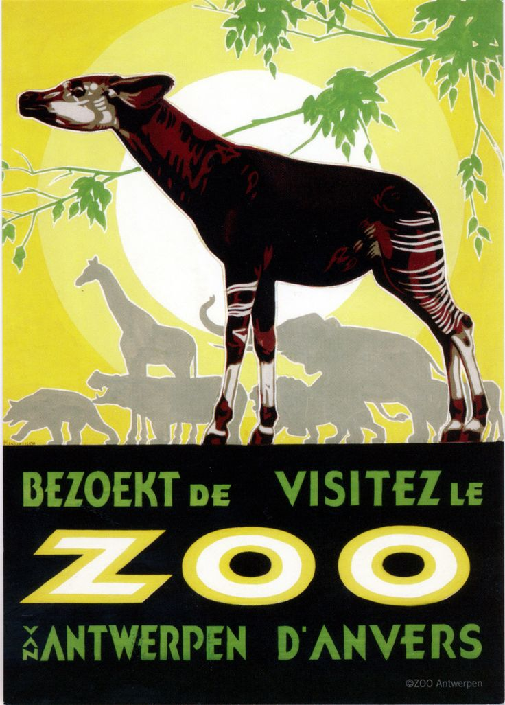 Antwerp Zoo Okapi Postcard from Jo in Schoten, Belgium