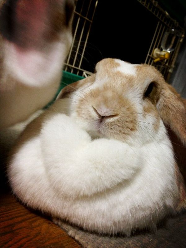 I love bunny dulaps! This one is shaped like a heart... so cool!