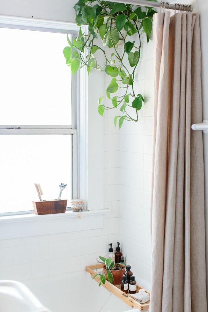 47+ Plante tombante salle de bain ideas in 2021