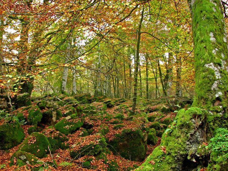 Selva de Irati, Navarra, como llegar, mapas, informacion, comer, dormir…