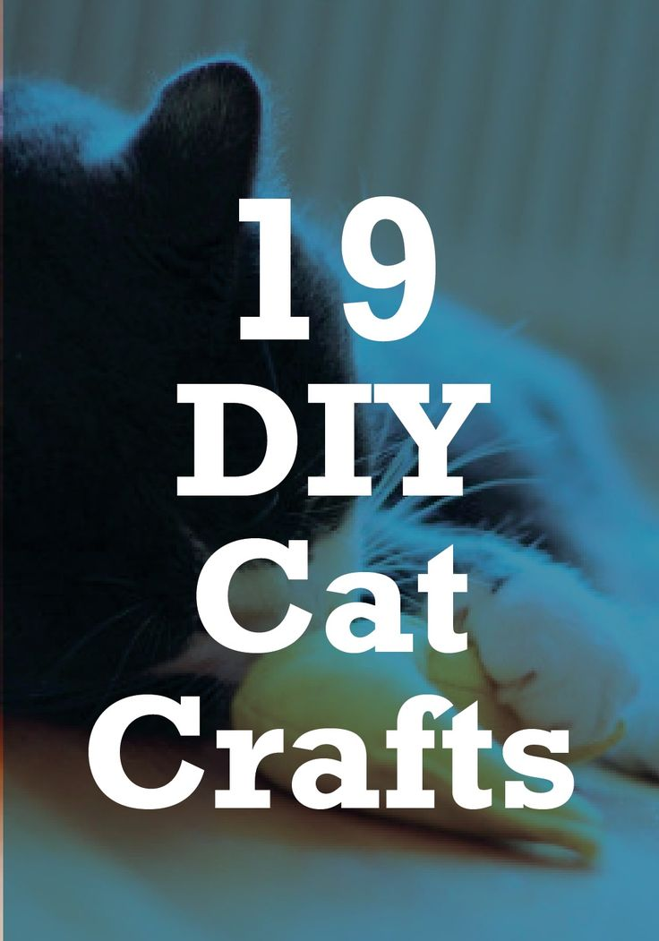 Check out these 19 DIY cat crafts you can make for pet right at home.
