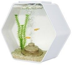 Deco Hexo Hexagon Fish Tank White £64.99    Quantity      FRF-HEX/W WHITE HEX TANK    Product Name: Deco Hex    Description: Deco Hexagonal fish tank    Designer aquarium Magic touch lighting feature for home, office and shops    Made by clear glass  Magic touch lighting feature  Advance lighting with High Power LED: Sun-like Shimmering Ripples creates a very relaxing environment  Blue LED's create Moonlight Effects at night  Built-in filtration unit is hidden in tank décor