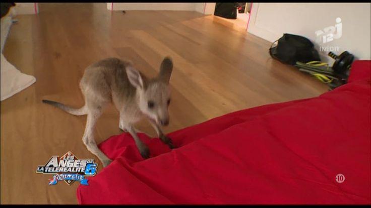 Les Anges 6: Victime de malnutrition, le kangourou est mort pendant le tournage