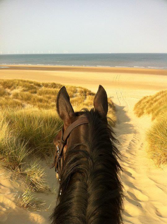 i've always wanted to go horseback riding on a beach... one day!