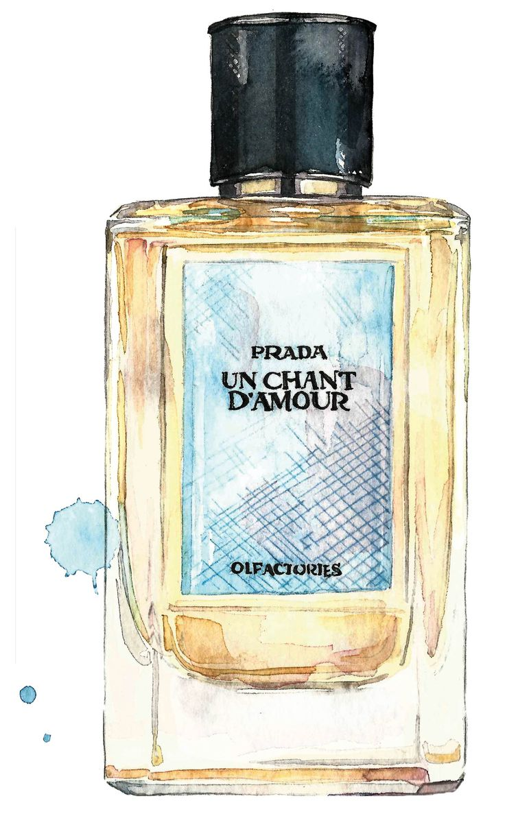Fragrance of the week   Prada Olfactories Un Chant D'Amour - Illustrated by Sarah Larnach
