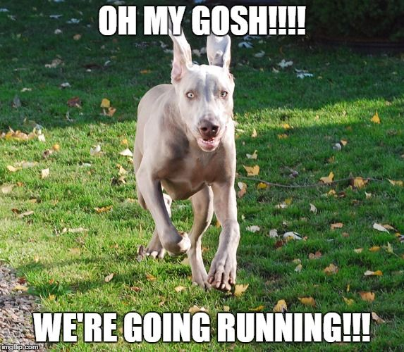e912c569a5a2d941fca0fe94afa083f2 long distance runners 66 best dog memes images on pinterest dog memes, funny dogs and,Dog Running Meme
