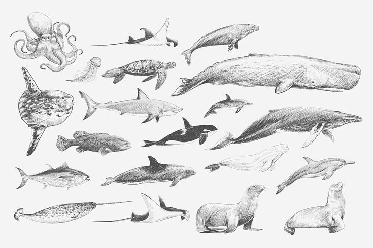 Marine life collection vector animal animals collection
