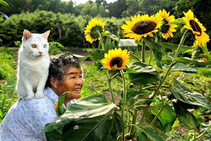 This Grandma And Her Cat Are The Cutest Best Friends Ever. It is a wonderful story