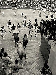 Pamplona, 2007. Bulls following some runners enter the bull ring, where the event ends. The bulls can be seen in the foreground and background of the picture