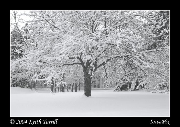 17 best images about trees of iowa on pinterest low