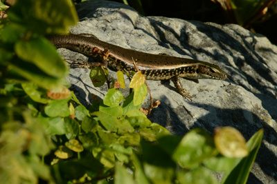 skink Art Print #lizard #reptile #photography #animals