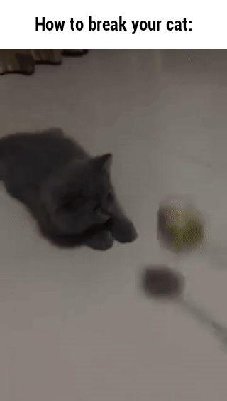 How to break your cat: GIF