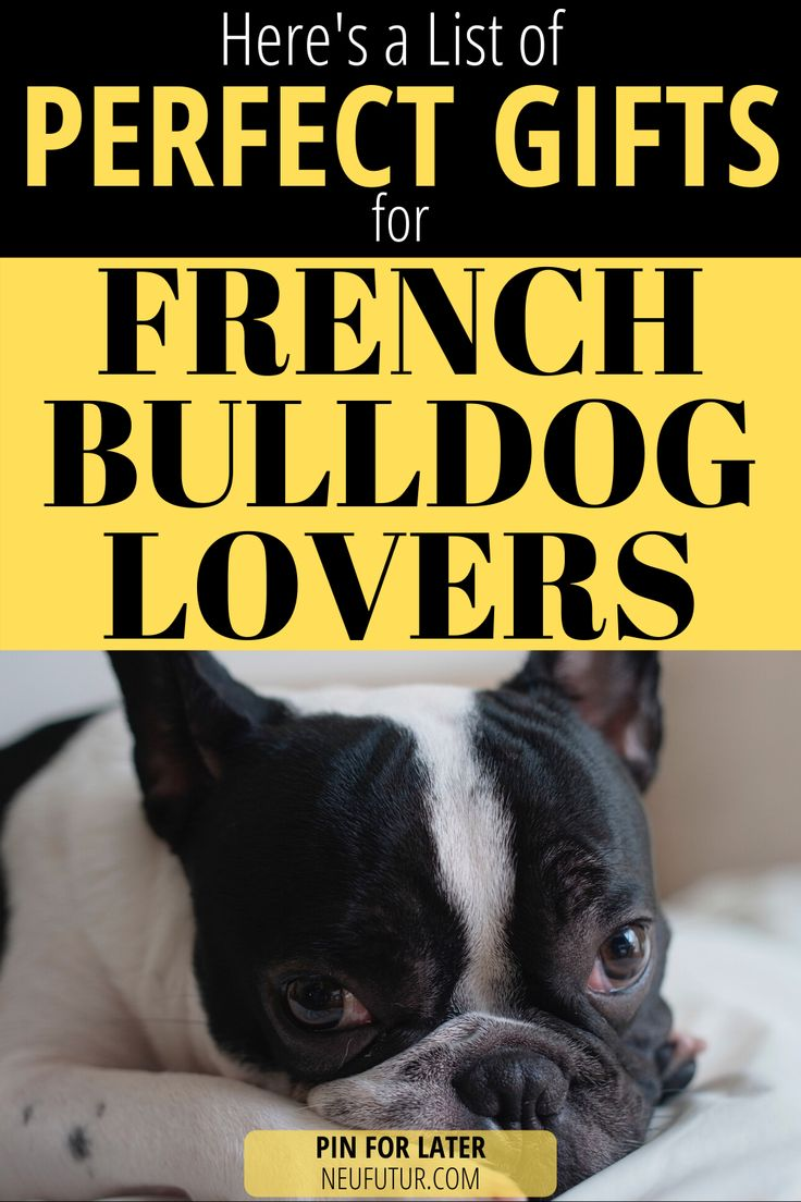 Perfect Gifts for French Bulldog Lovers in 2020 Bulldog
