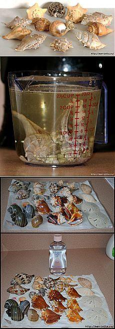 Как отмыть ракушки от известкового налета и избавиться от запаха!