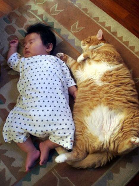Hilarious! Big Cats, Best Friends, Baby Fat, Fat Cat, Cute Animals, Cat Naps, Asian Baby, Crazy Cat Lady, Animal Photos