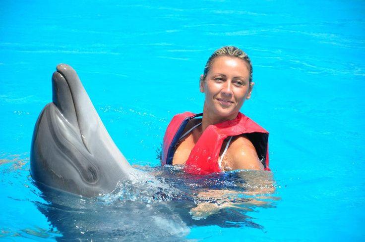 8 best Nuotare con i Delfini a Sharm el Sheik images on Pinterest ...