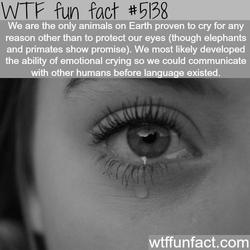 Why do we cry? - WTF fun facts | Get more fun here at http://gwyl.io/